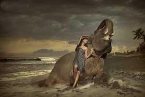 22 лунные сутки - Слон