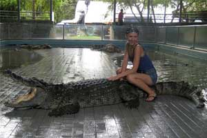 Лунный день сегодня - крокодил